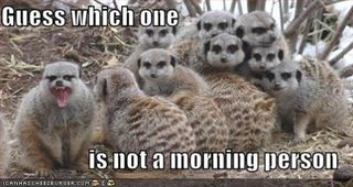 Funny-pictures-morning-person-lemurs[1]