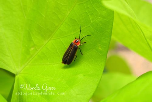 BUG ON LEAF
