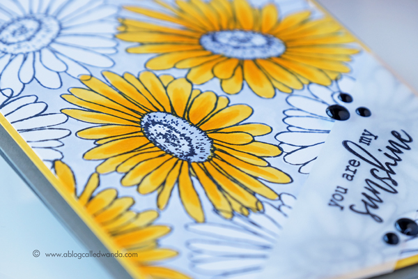 Daisies colored with Copic Markers. Hero Arts Stamps