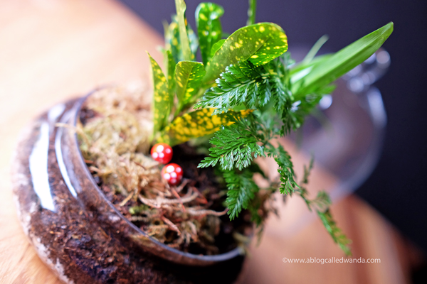 Indoor garden terrarium - Syndicate Home Gardening