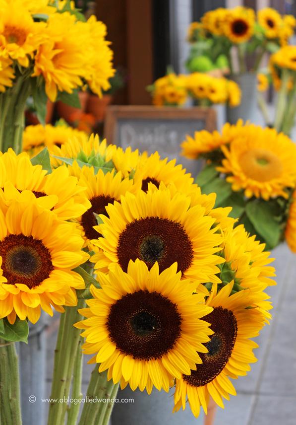 Flower Market in San Francisco. Photo by Wanda Guess