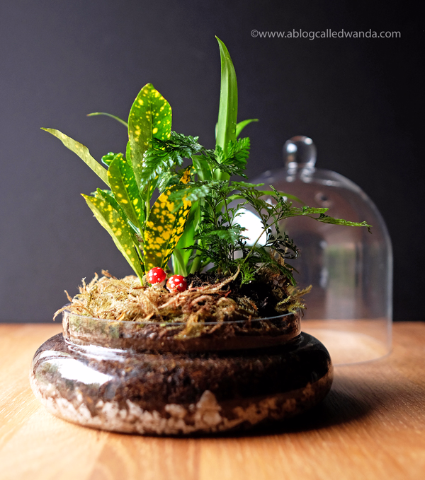 Terrarium - make your own