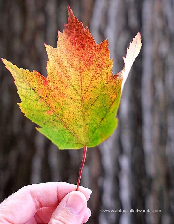 Fall Foliage Seattle Washington