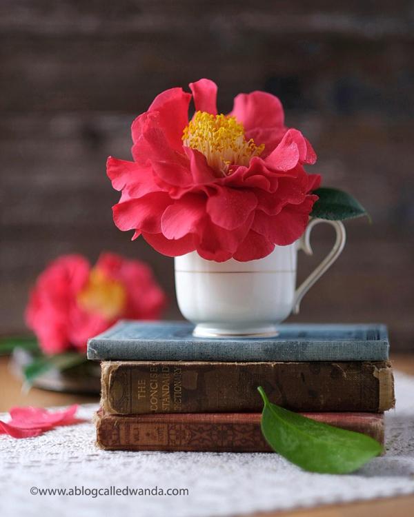 Camellias - Red Camellias from Sacramento California. Flower photos. Wanda Guess