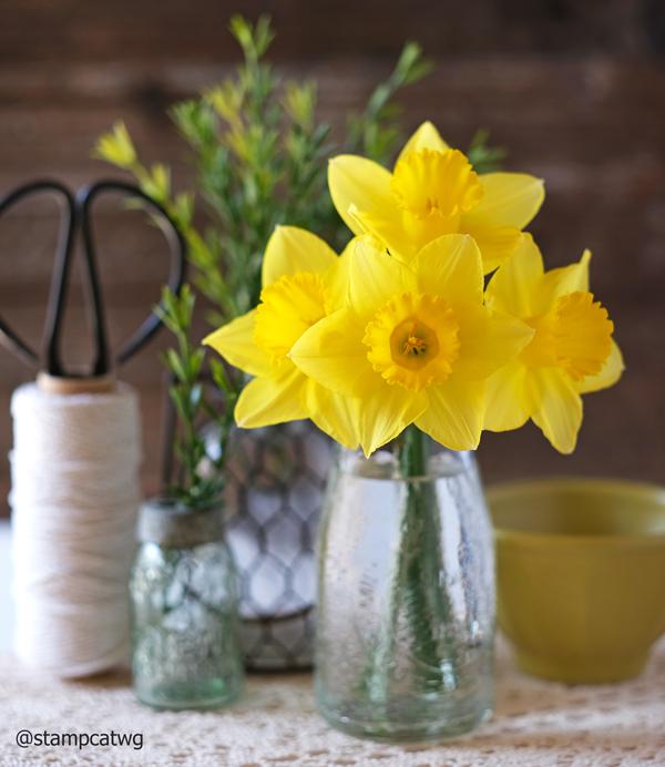 Daffodils in California!